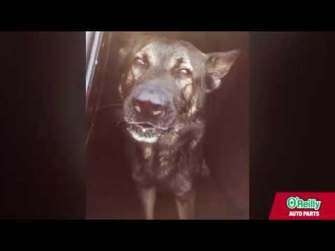 Cerberus The Singing Police Dog