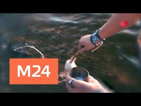 """""""Раскрывая мистические тайны"""": магия озер - Москва 24"""