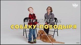 Дети встретили Собаку-Поводыря для Слепых
