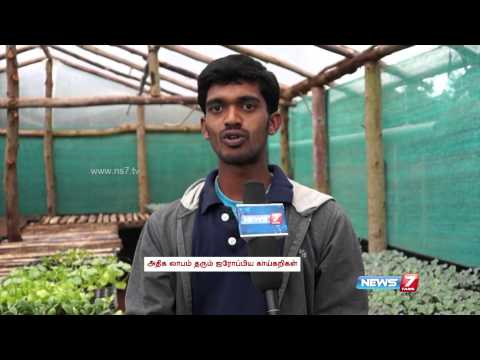 Growing European Vegetables Like Broccoli A Big Hit In Kodaikanal