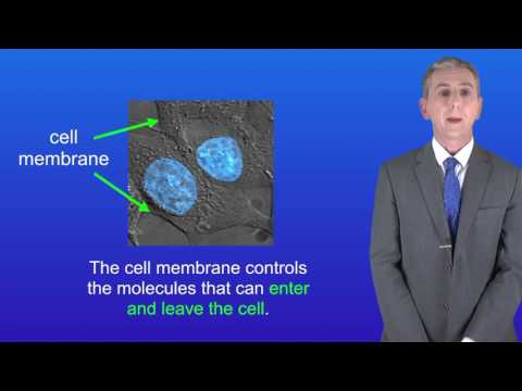 GCSE Science Biology (9-1) Animal Cells