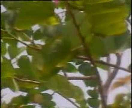 Bunga Bakung Yang Di Lembah (Masnait Group)