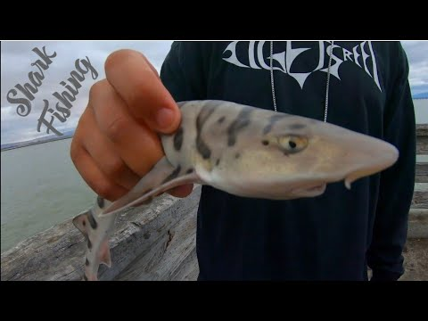 Shark Fishing At Dumbarton Pier, Fremont CA   ITGETSREEL Episode 26