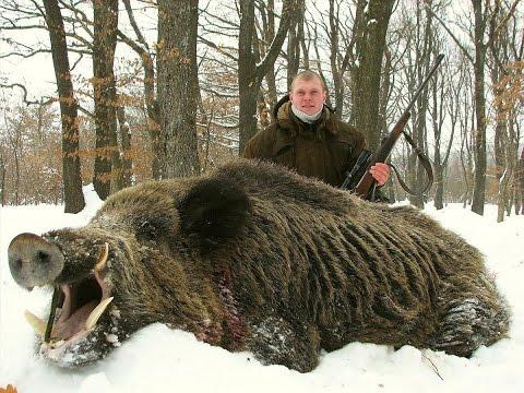 Hunting wild boar 2016