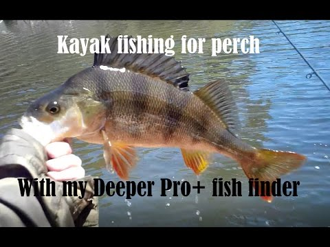 Kayak Fishing For Redfin Perch With My Deeper Pro+ Fish Finder