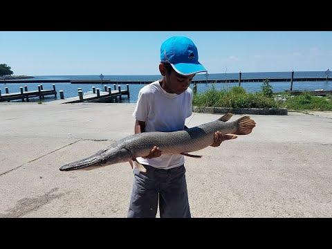 Catching An Alligator Gar In Lake Pontchartrain