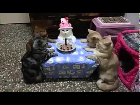 Doğum günü kutlaması yapılan kedi (Made in İzlemen)