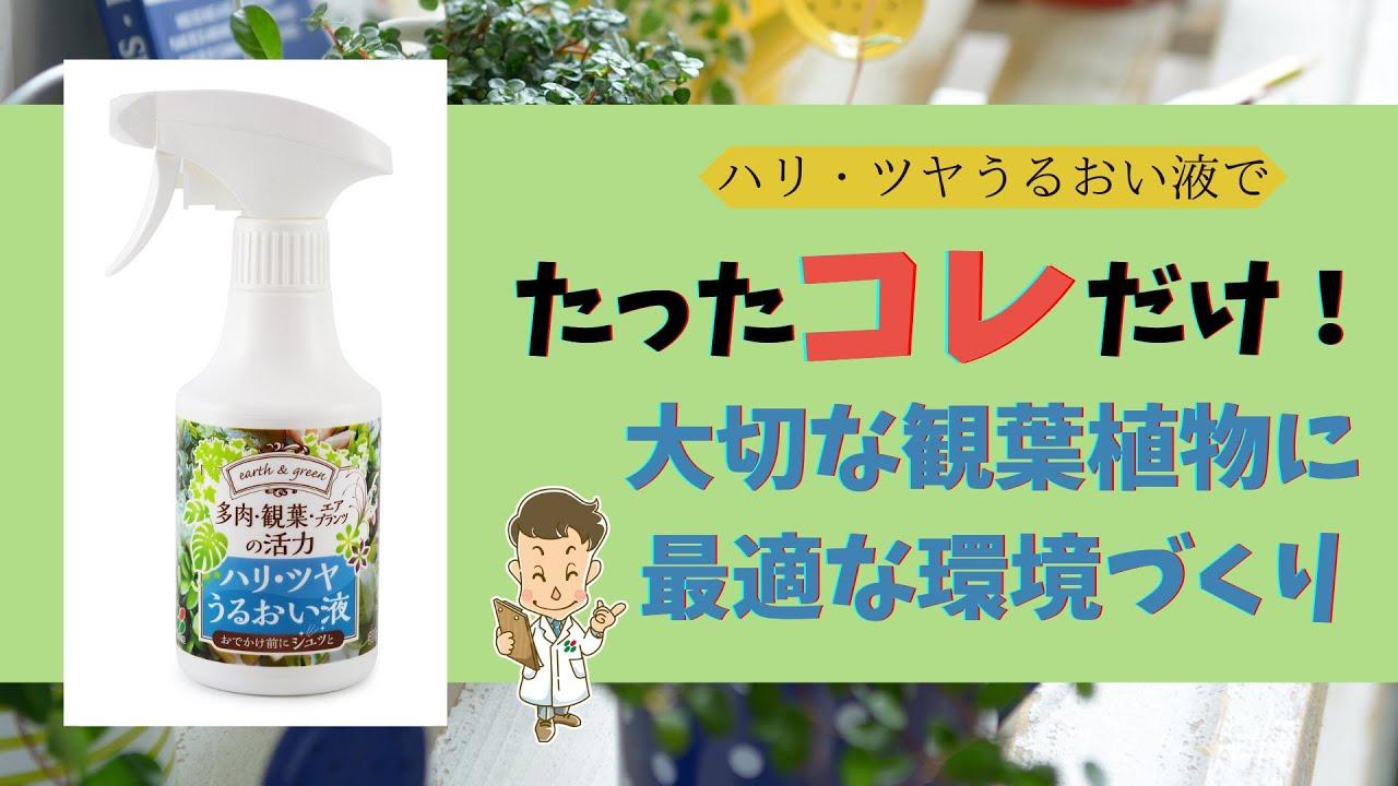【コレだけ】観葉・多肉・エアプランツにに最適な環境を作ろう!【葉のお手入れ】