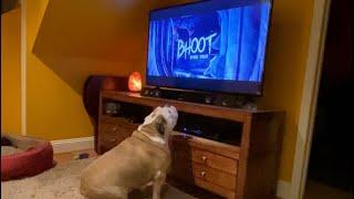 "Bulldog Reaction to ""Bhoot: The Haunted Ship"" Official Trailer"