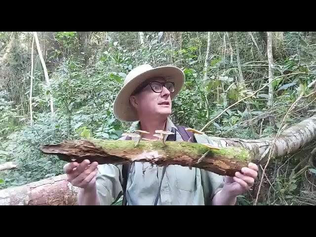Série Aulas de Campo: Aula sobre fungos