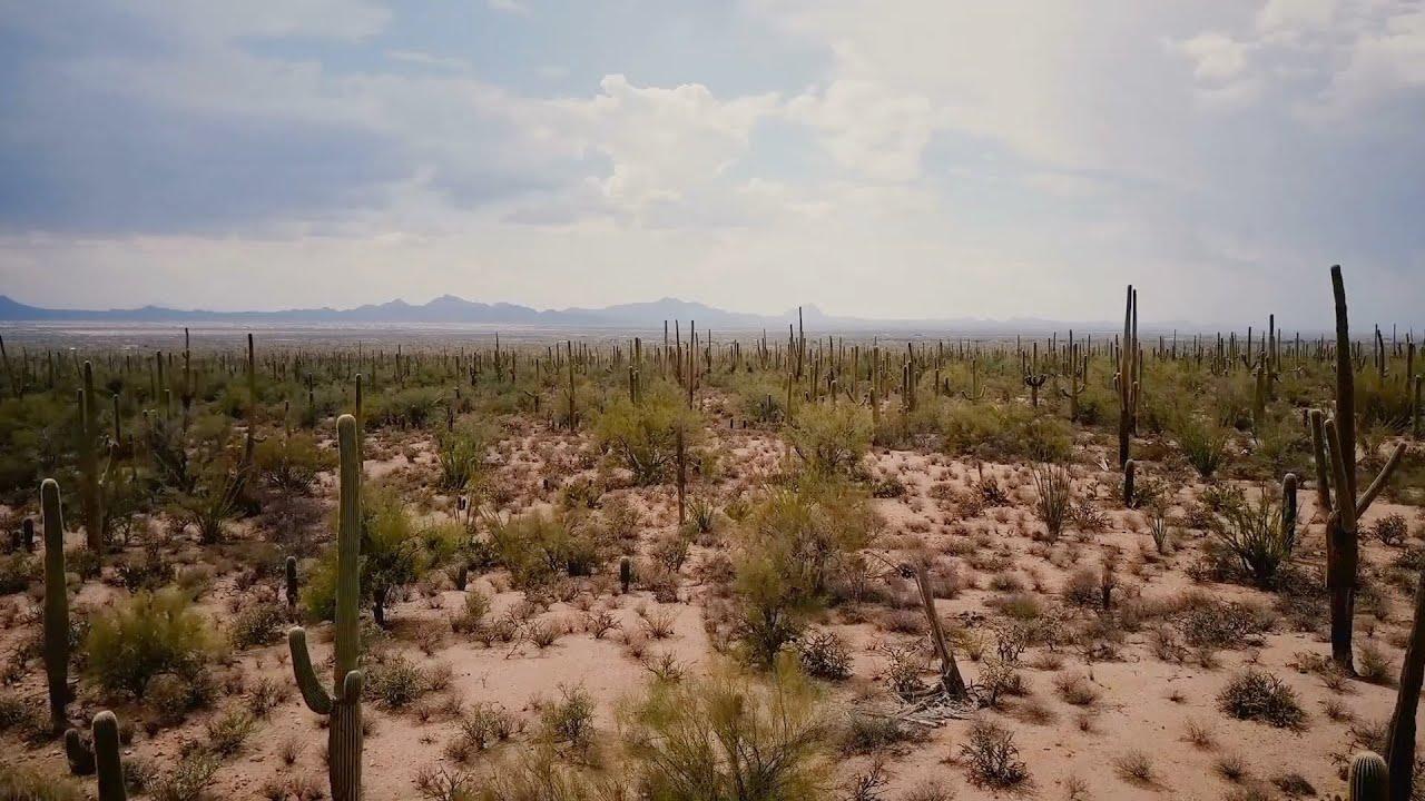 إزاي النباتات الصحراوية بتعيش بدون مياه؟