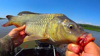 ОНИ ВОРУЮТ СНАСТИ И СГИБАЮТ КРОКОДИЛЫ В ДУГУ Рыбалка на ДИКИХ Волжских САЗАНОВ