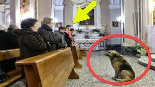 Heart Broken: Loyal Dog Attends Church Every Day For Waiting His Dead Owner To Return