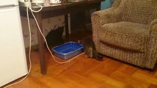 Забежал чужой кот в квартиру