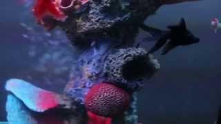Красивый аквариум цилиндрический в интерьере квартиры(, 2015-11-28T14:28:29.000Z)