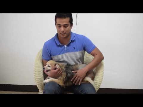 Mascota es salvada de un carcinoma desde Royal pets
