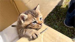トンビに狙われていた子猫を保護しました