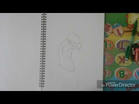 Durp Draws - ANDEAN CONDOR