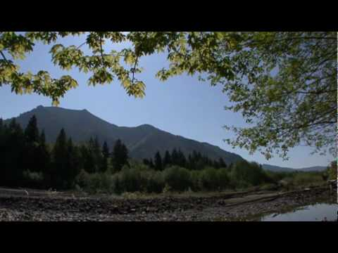 Pure Light Mind - From Meditation Moods Nature Relaxation DVD