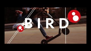 Bird Electric Scooters - UCLA & Santa Monica