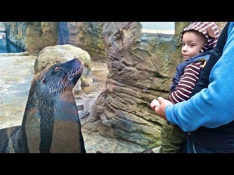 Поход в зоопарк в Сиднее (Австралия), Taroonga ZOO, Sydney, Australia