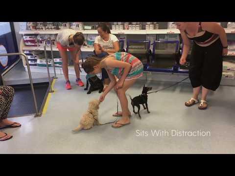The Sound Hound Dog Behaviour & Training Ad