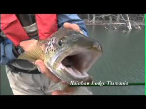 Rainbow Lodge Guided Fly Fishing Tasmania Filmed By FF Media