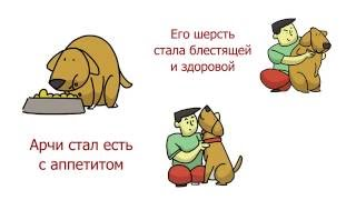 Корм для собак Meradog. Правильное питание вашей собаки.