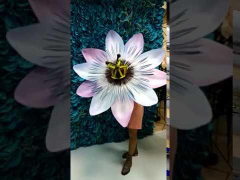 Пассифлора - новый гигант Юлии Прохоровой