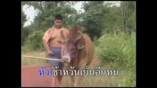 เด็กแลวัว บังเเดง