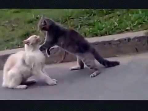 Приколы драки котов