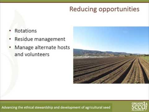 Organic Seed Production Six Webinar Series Part 3: Diseases and Pests