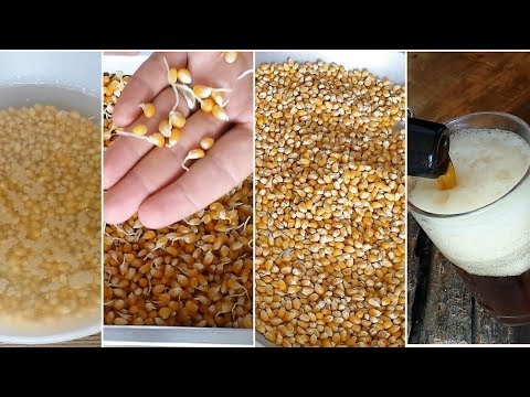 How To Malt CORN At Home