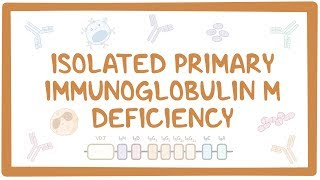 Isolated primary immunoglobulin M deficiency