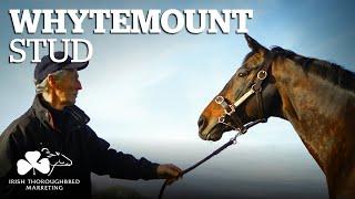 ITM Irish Stallion Showcase 2021 - Whytemount Stud
