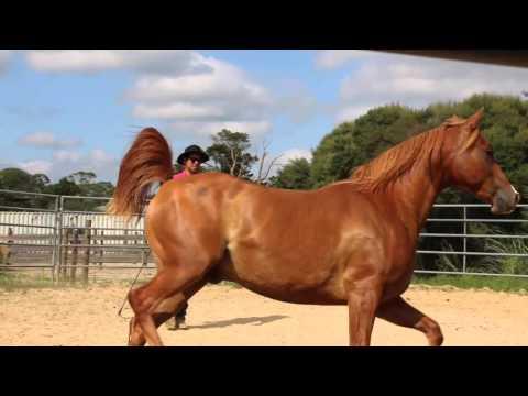Native Horsemanship Presents