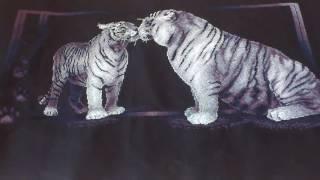 """Тигриная любовь. Панна. СП """"В мире животных"""" Завершение работы."""