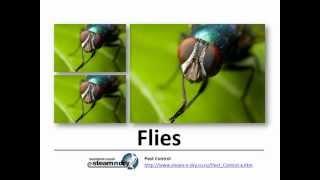 Flea Control Pest Flies