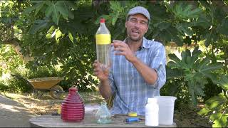 Aprende a fabricar tus propias trampas para la mosca de la fruta.