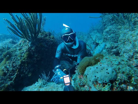 Майами Затопило. Вырвались на Подводную Охоту