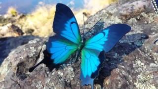 Hand made metal butterflies & chrysalis.