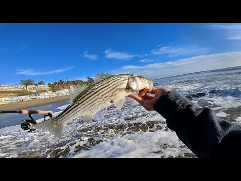 Striper And Perch On New Year's Eve