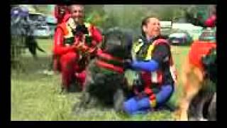 Русский чёрный терьер (Собака Сталина), все породы собак, 101 dogs. Введение в собаковедение.