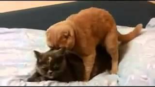 funny cat sex video