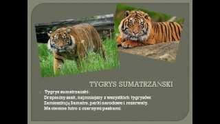 Ginące zwierzęta Azji Południowo-Wschodniej - Ola, Weronika