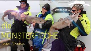 #7 Norwegen - die MONSTERFISCHE von Smöla + MEGA Beifang/Dorsch Leng Seeteufel  Fishing angeln