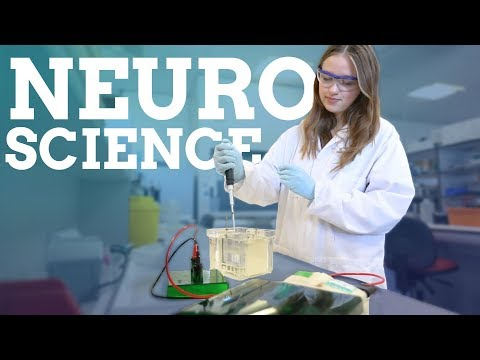 Neuroscience | Advice, work experience and city life