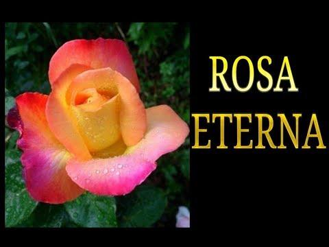rosa stabilizzata, come si realizza una rosa stabilizzata procedimento, Fiori secchi, conservare
