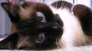 Милые фото котят от канала.