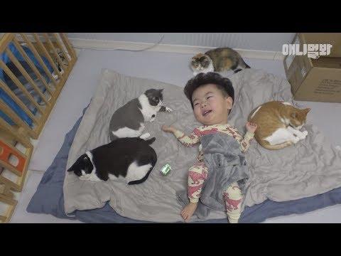 개나 고양이를 키운다면 꼭 봐야될 영상 2